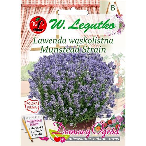 Lavandă Munstead Strain Legutko imagine 1 articol 87120