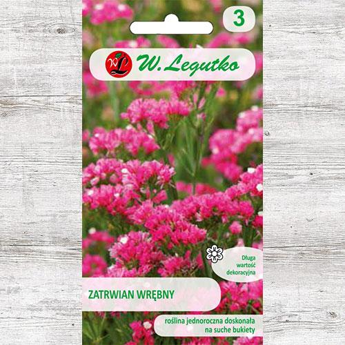 Limonium sinuatum (Sărăturică) roz carmin Legutko imagine 1 articol 87097