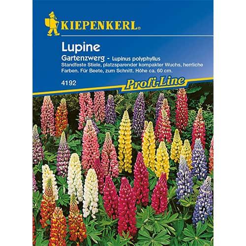 Lupin pitic de grădină Kiepenkerl imagine 1 articol 77449