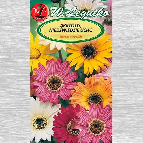 Margaretă africană, mix multicolor Legutko imagine 1 articol 69555