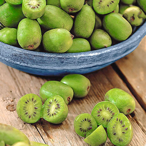 Mini kiwi Issai