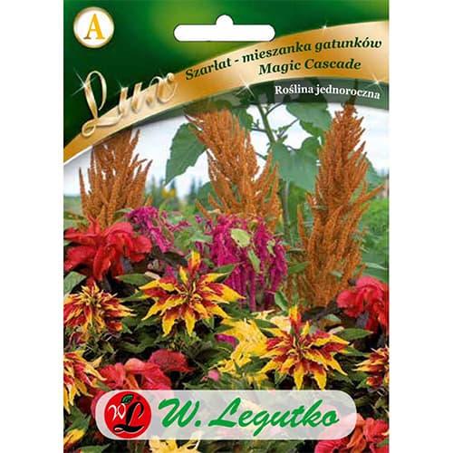 Moțul curcanului (Amaranthus) Magic Cascade Legutko imagine 1 articol 86758