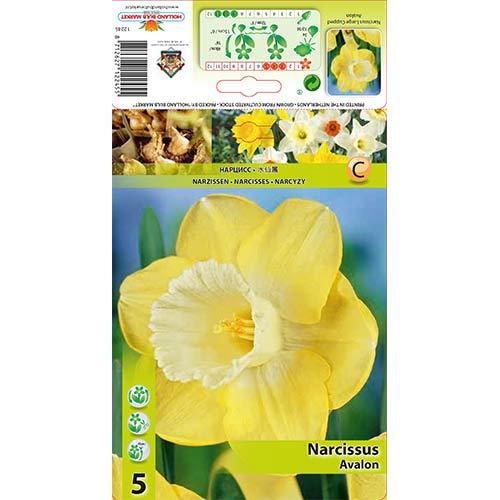 Narcise Avalon imagine 1 articol 68064