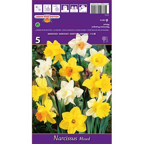 Narcise gigant mix multicolor imagine 1 articol 67649