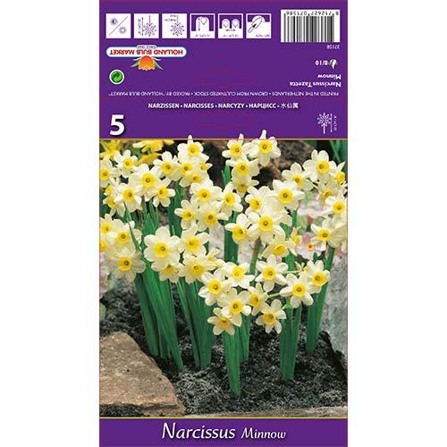 Narcise Minnow imagine 1 articol 67652
