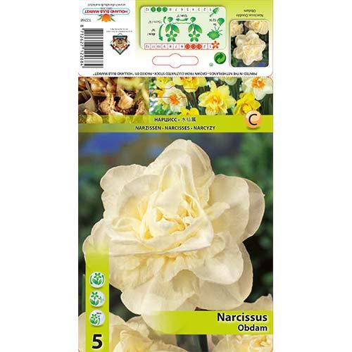 Narcise Obdam imagine 1 articol 70286