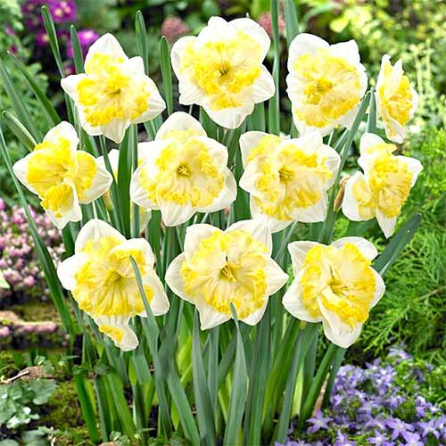 Narcise Printal imagine 1 articol 67657