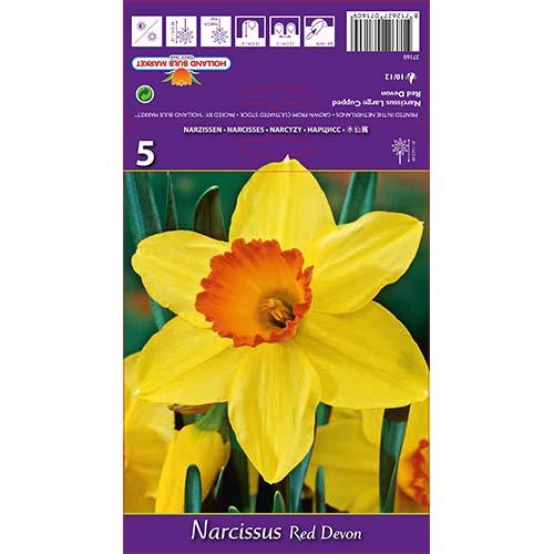 Narcise Red Devon imagine 1 articol 67659