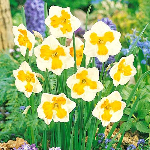 Narcise Tricollet imagine 1 articol 67436