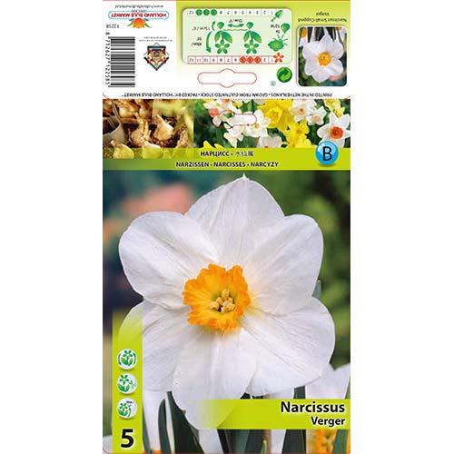 Narcise Verger imagine 1 articol 70279