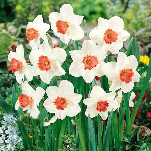 Narcise Pink Charm imagine 1 articol 67426