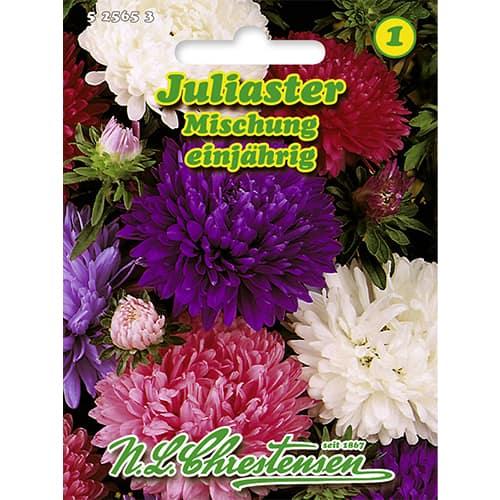 Ochiul boului Juliaster, mix multicolor Chrestensen imagine 1 articol 86130