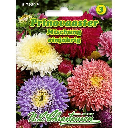 Ochiul boului Prinovaaster, mix multicolor Chrestensen imagine 1 articol 86137