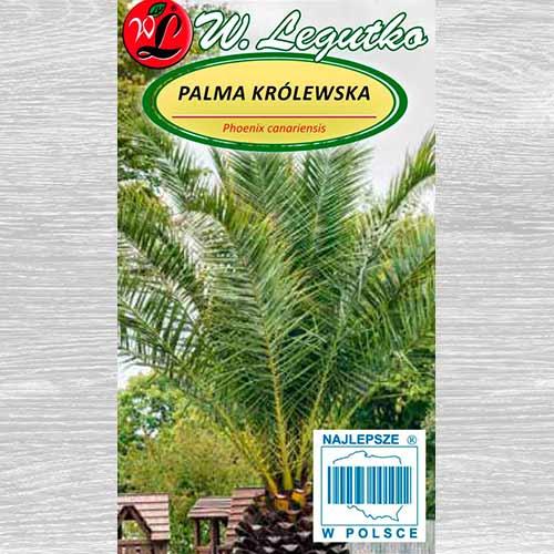 Palmier Legutko imagine 1 articol 69616