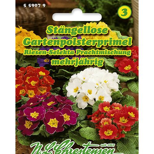 Primula Giant Selekta, mix multicolor Chrestensen imagine 1 articol 86181