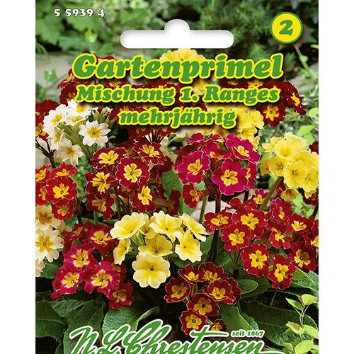 Primula, mix multicolor Chrestensen imagine 1 articol 86183