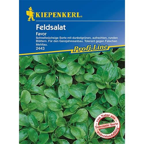 Salată de câmp (fetică) Favor Kiepenkerl imagine 1 articol 86449