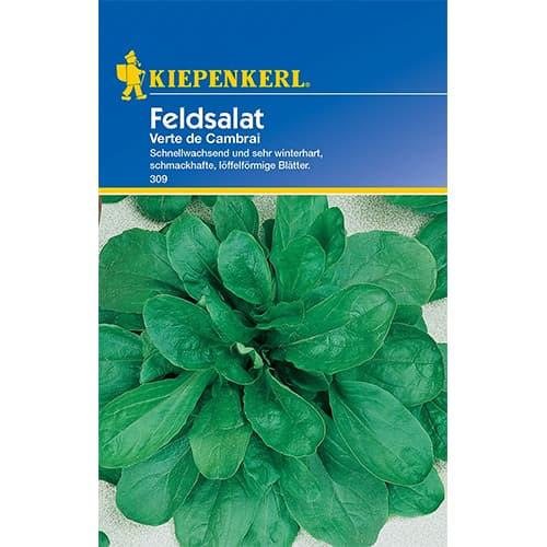 Salată de câmp (Fetică) Verte de Cambrai Kiepenkerl imagine 1 articol 77493