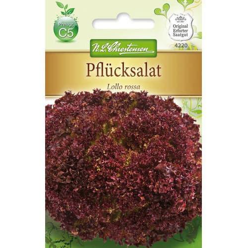 Salată Lollo Rossa Chrestensen imagine 1 articol 78779