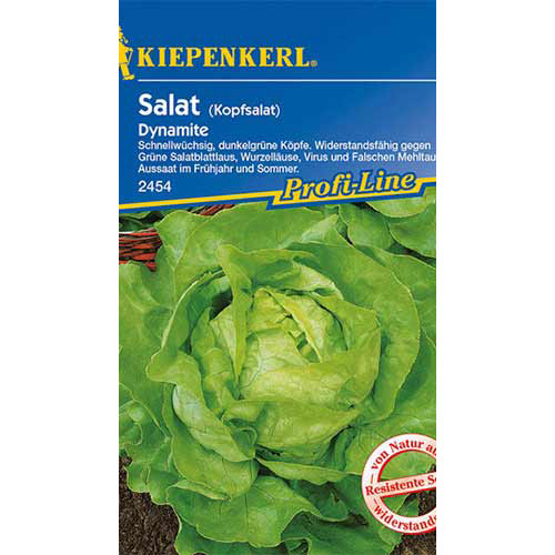 Salată verde Dynamite Kiepenkerl imagine 1 articol 86461