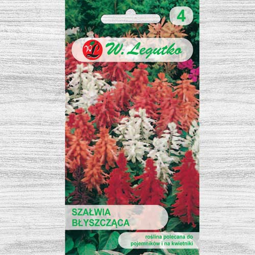 Salvie decorativă, mix multicolor Legutko imagine 1 articol 78592
