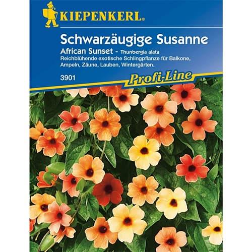 Thunbergia Susanne African Sunset Kiepenkerl imagine 1 articol 86309