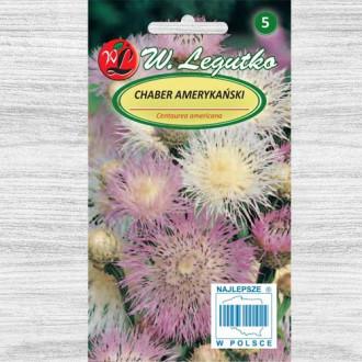 Albăstrele americane roz Legutko imagine 2