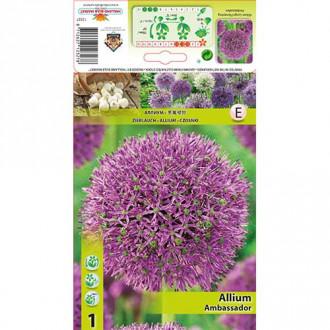 Allium Ambassador imagine 5