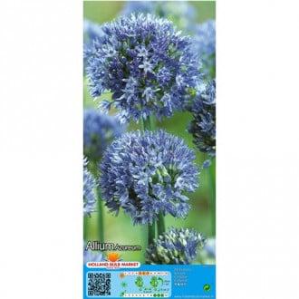 Allium Azureum imagine 6
