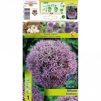 Allium Gladiator imagine 2