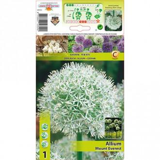 Allium Mount Everest imagine 8