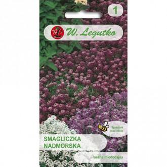 Alyssum, mix multicolor Legutko imagine 7