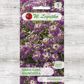 Alyssum violet Legutko imagine 6
