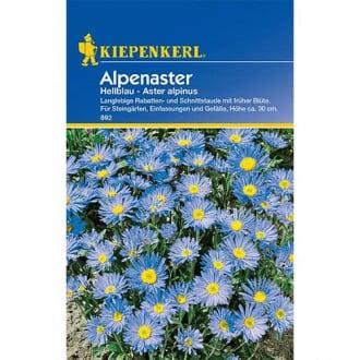 Aster alpin Light Blue Kiepenkerl imagine 2