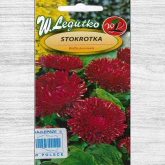 Bănuței roșii cu flori mari Legutko imagine 2