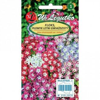 Brumărele de grădină stelate, mix multicolor Legutko imagine 2
