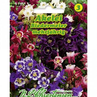 Căldărușă (Aquilegia) Biedermeier, mix multicolor Chrestensen imagine 3