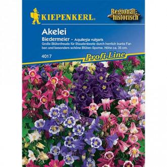 Căldărușă (Aquilegia) Biedermeier Kiepenkerl imagine 4
