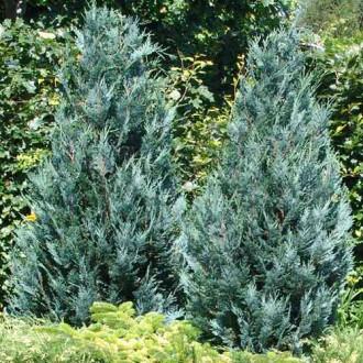 Chiparos Pelts Blue imagine 8