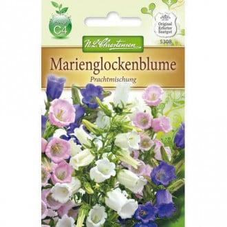 Clopoțel (Campanula), mix multicolor Chrestensen imagine 5