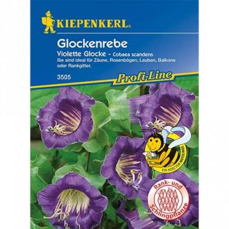 Cobaea Violett Kiepenkerl imagine 1