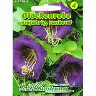 Cobaea Violettblau Chrestensen imagine 1