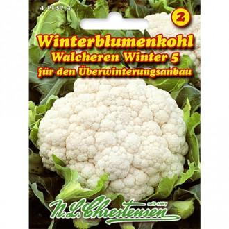Conopidă Walcheren Winter 5 Chrestensen imagine 7