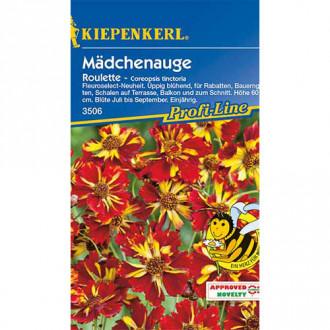 Coreopsis Roulette Kiepenkerl imagine 2