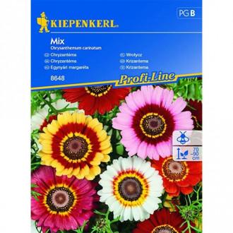 Crizantemă, mix multicolor Chrestensen imagine 1