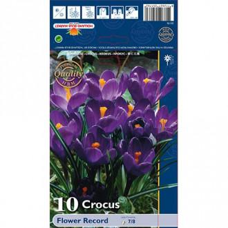 Brândușe Flower Record imagine 5