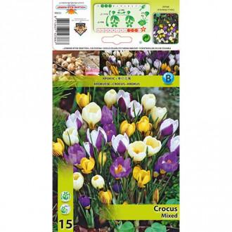 Brândușe botanical mix multicolor imagine 6