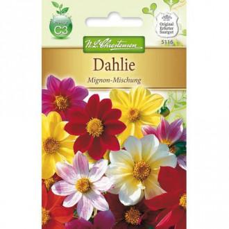 Dalii Mignon, mix multicolor Chrestensen imagine 4
