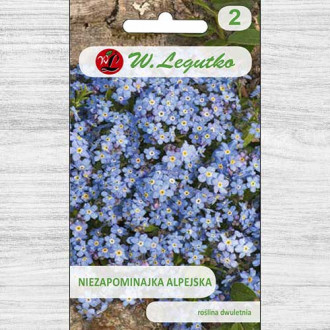 Floare de nu mă uita, albastră Legutko imagine 5