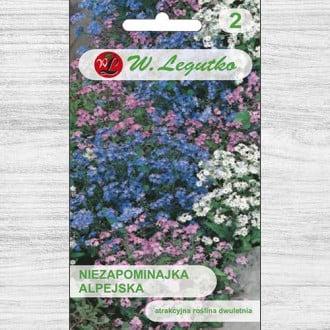 Floare de nu mă uita, mix multicolor Legutko imagine 6